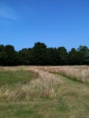 eaton_street_park_wildflower_meadow