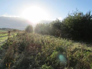 whiston_outdoors
