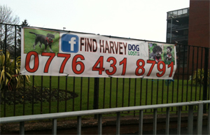 find_harvey