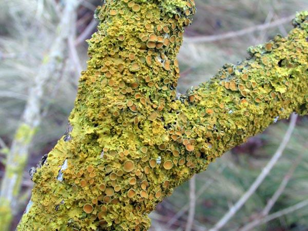 lichens_close_up