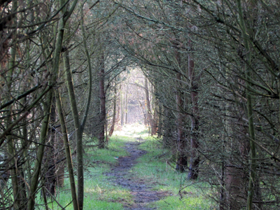 whiston_woods_whiston