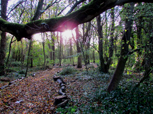whiston_greenbelt_1