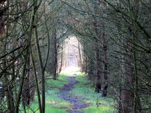 whiston_greenbelt_4