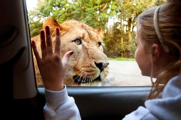 knowsley_safari_tiger_girl