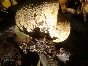 fungi_2