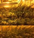 cannabisfeat